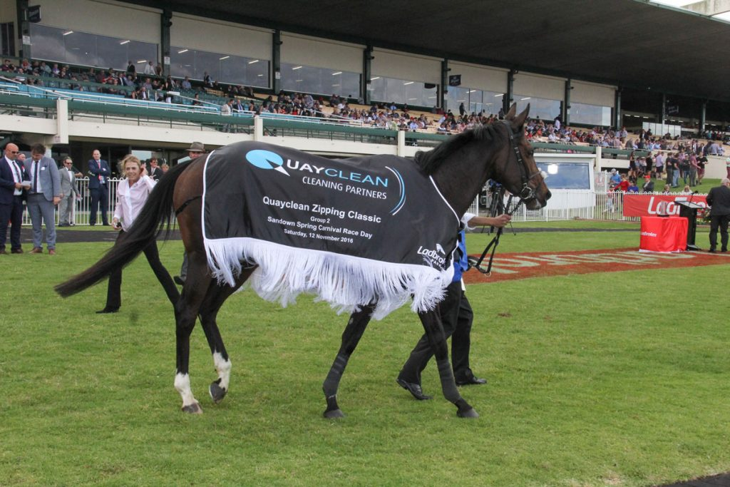 Racehorse wearing Quayclean Zipping Classic coat at the Sandown Spring Carnival Race Day in 2016